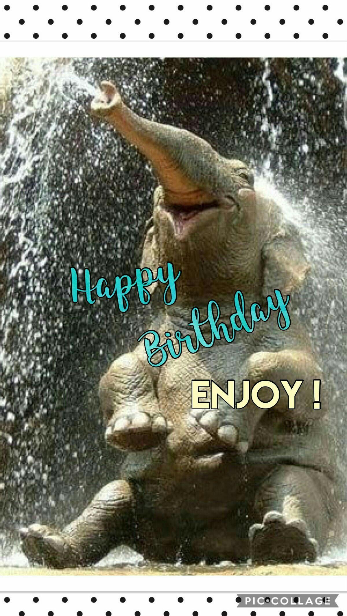 Happy Birthday Elephant Birthday Greetings Funny Funny Happy Birthday Wishes Happy Birthday Brother