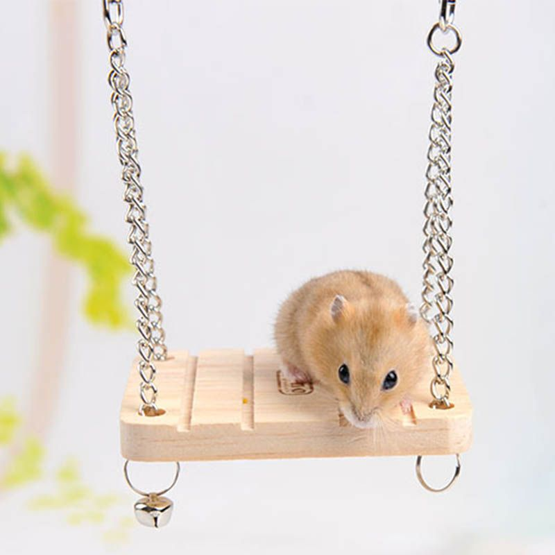 Pin by Ac.y.c on I LOVE Cute Animals Hamster, Small