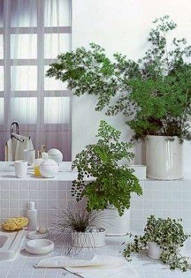Pflanzen für badezimmer  Pflanzen im Badezimmer | Bathroom | Pinterest | gefliestes ...