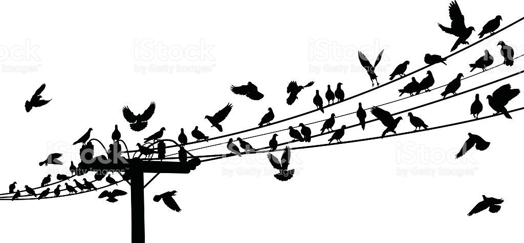 Vector silhouettes of birds roosting on telegraph wires