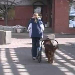 Dog Powered Scooter Is Pretty Much The Same As A Dog Powered Sled Video Dogs Dog Sledding Canine