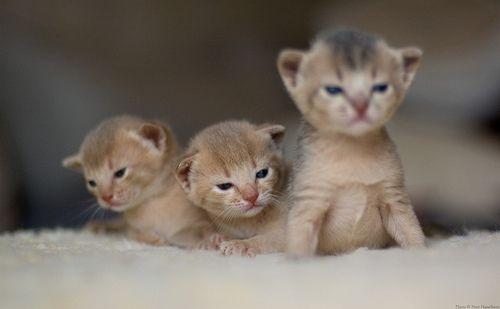 Newborn Kittens Qui Comando Io Newborn Kittens Cute Little Animals Baby Kittens