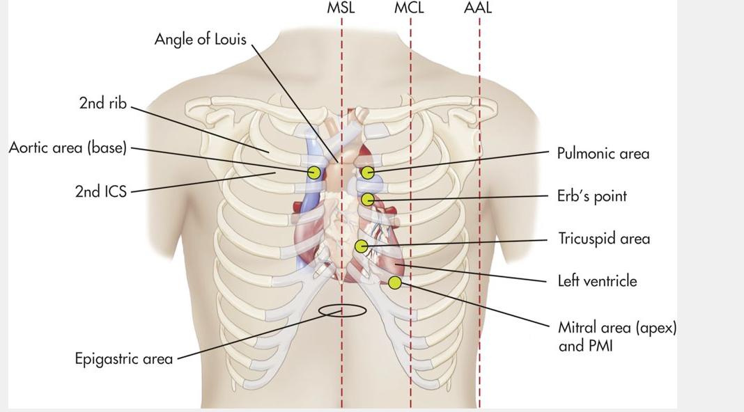 Pin by Con Brennan on Anatomy/Medical | Pinterest | Anatomy