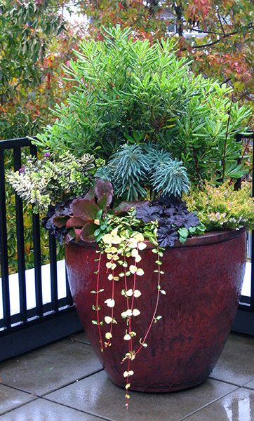 Our Container Gardening Services In Seattle Assure Aesthetics And Knowledge  Come Together To Create Lovely Container