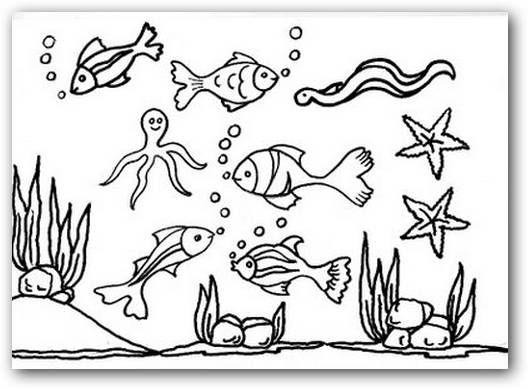 Imágenes Para Colorear Animales Del Mar Fotos O Imágenes