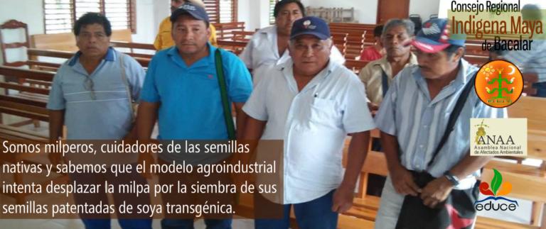 """""""Los impactos en nuestros territorios serán terribles"""", mayas vs trasgénicos en Quintana Roo, México."""