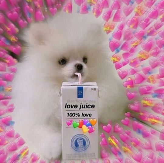 lesbian meme Tumblr Cute love memes, Love memes, Cute