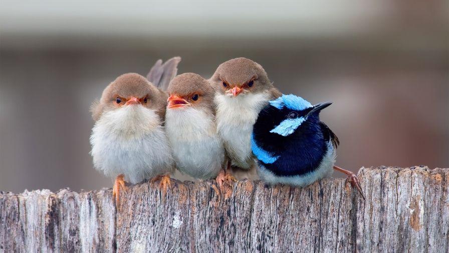 Cute Birds Hd Free Download Wallpapers Funny Birds Cute Birds Pretty Birds