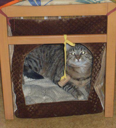 la cabane de chat sous une chaise.