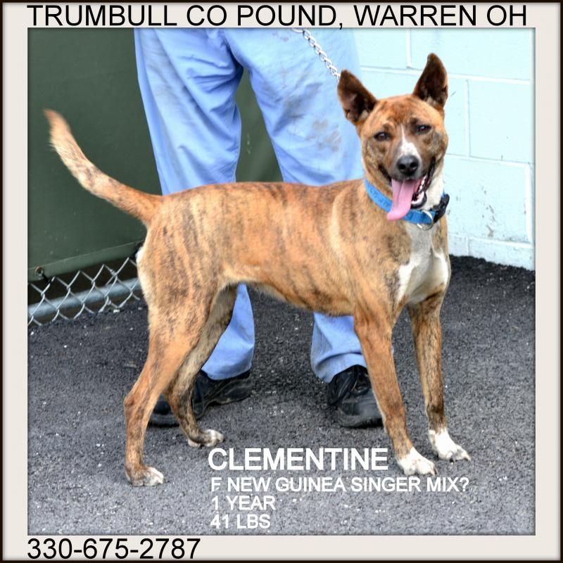 Adopt Clementine URGENT on Dog mixes, Trumbull county, Dogs