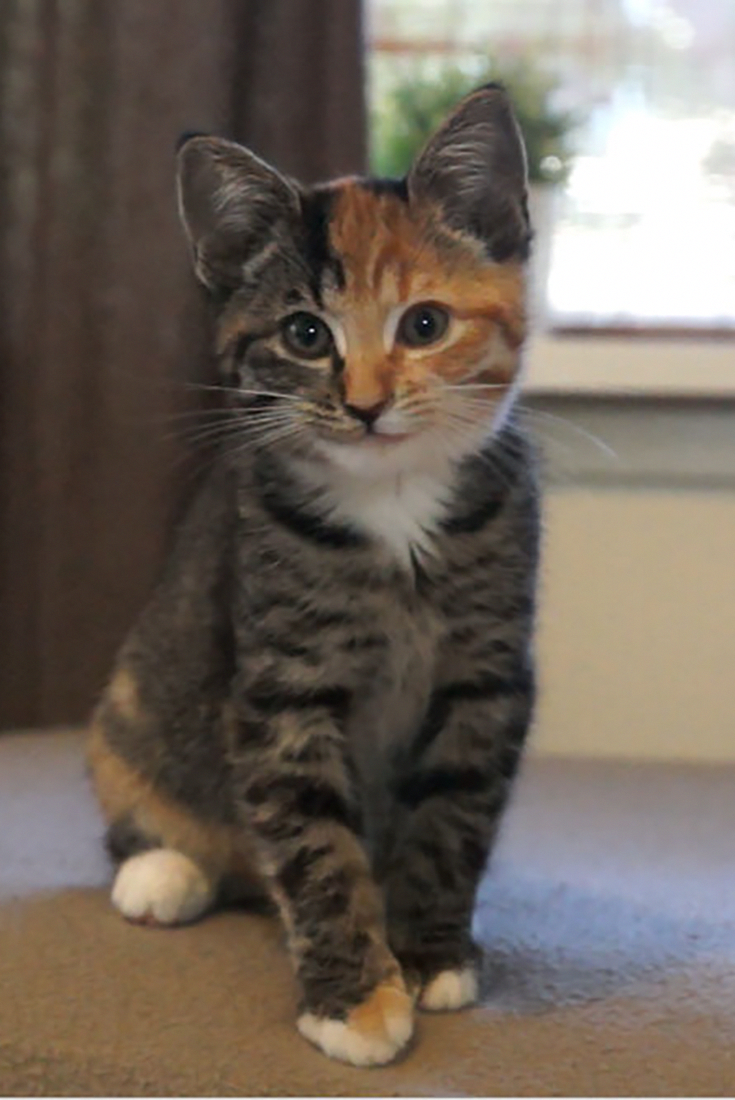 This Is Little Maci The Cute Two Faced Kitten Cats Kittens Adorableanimals Animals Cuteanimals Cutecats F Cute Cats Cute Cat Gif Cute Cats And Kittens