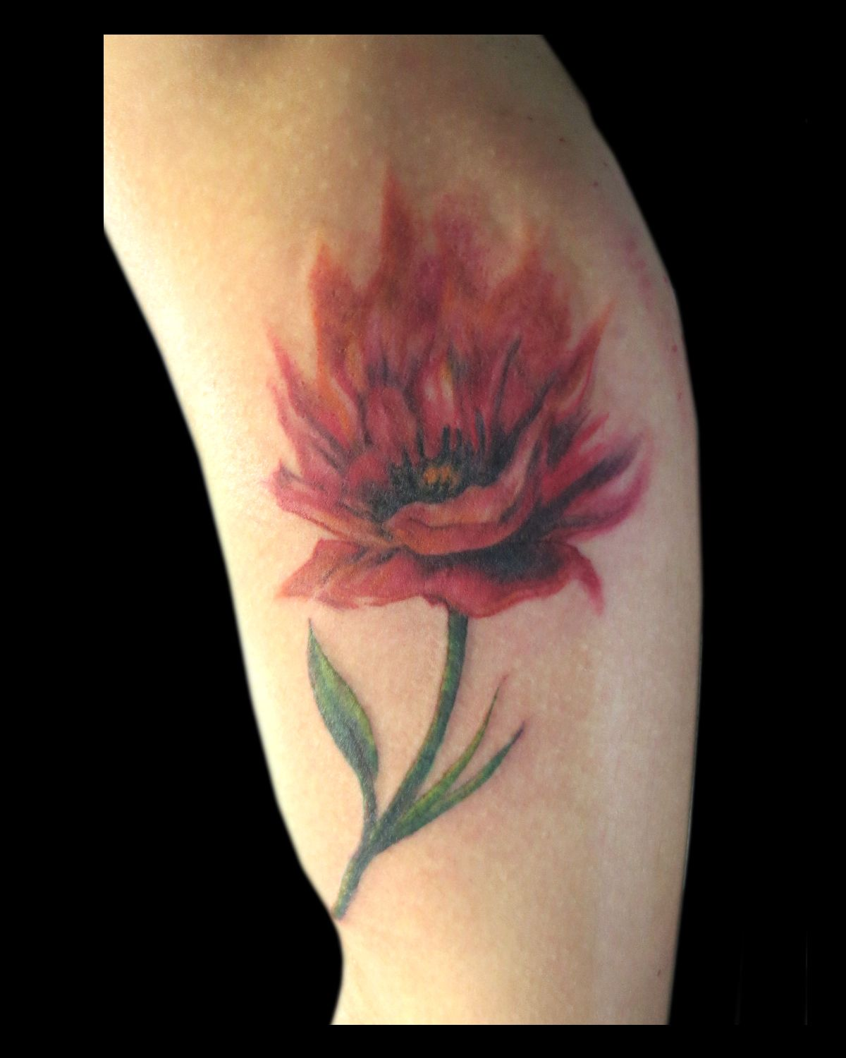 Watercolor poppy tattooed by Jude — at Damask Tattoo in Seattle, WA ...