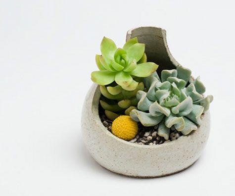 the pocket beastie planter