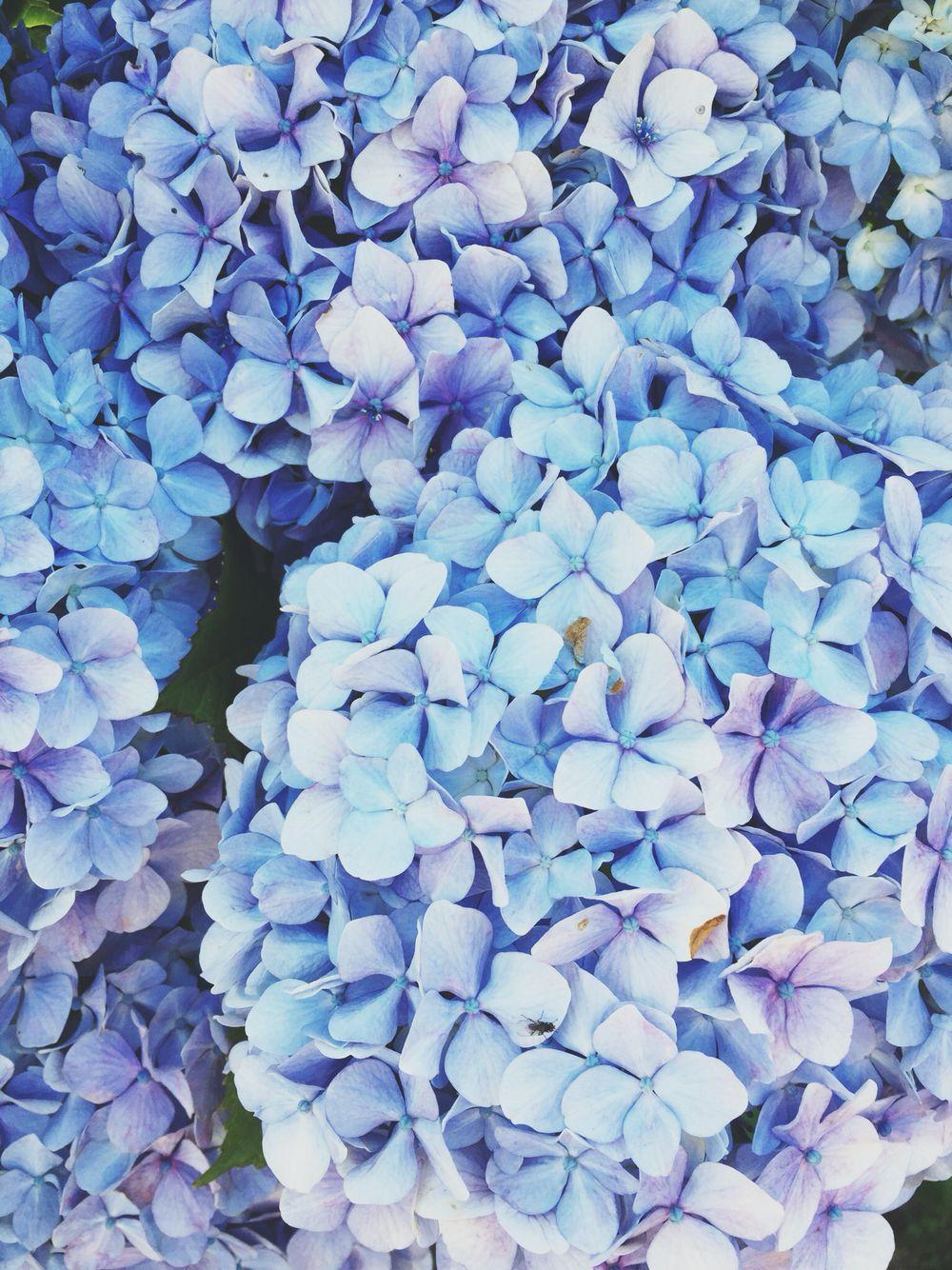 jubelam Blue flower wallpaper, Flower aesthetic, Blue