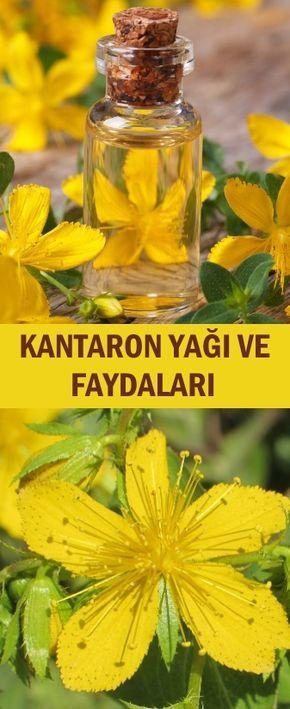 Kantaron Yagi Ve Faydalari Natural Herbs Herbal Medicine