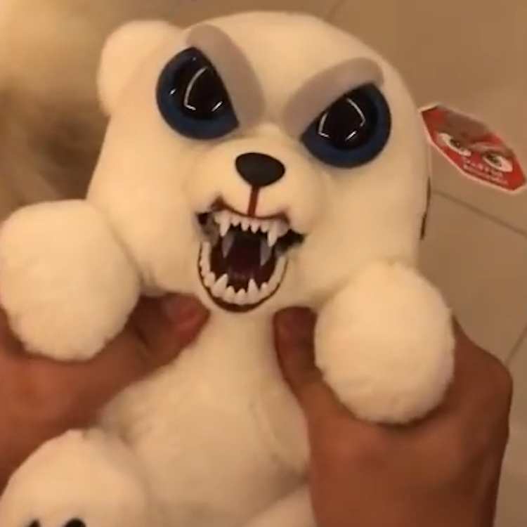 A Little White Dog Hilariously Mimics A Feisty Teddy Bear That Bares Its Teeth When Squeezed White Dogs Pomeranian Dog Dogs