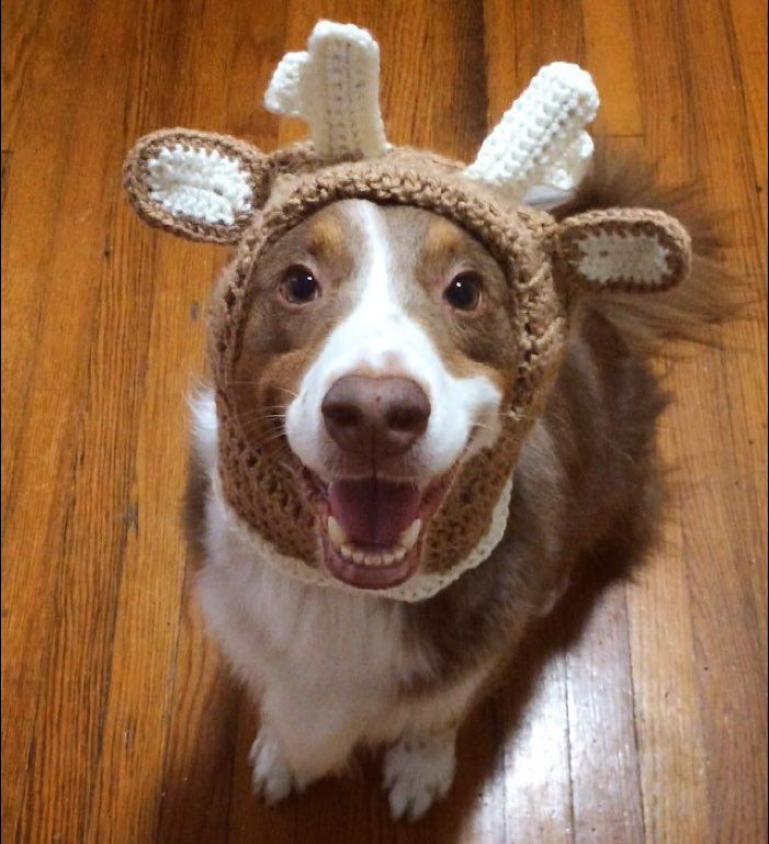 See ma! I'll be a nice reindeer this year! Tell Santa I've been good!! #tuckerthebc  Here's an entry for @graywoof @lexiesheartbeat @blueeyeskye and @thedoxieteers contest! #ChristmasSpiritContest  Here's an entry for @harlowandsage @hollyupnorth @miniaussie_bryn and @hootandco contest! #barkthehalls2  Follow my PAWSOME partner @sheldonandkingston  Save 10% off of your entire @animalhearted order with the code: 'TUCKNOAK10'! The link to their store is in my profile!  #weheartit #weheartpups…