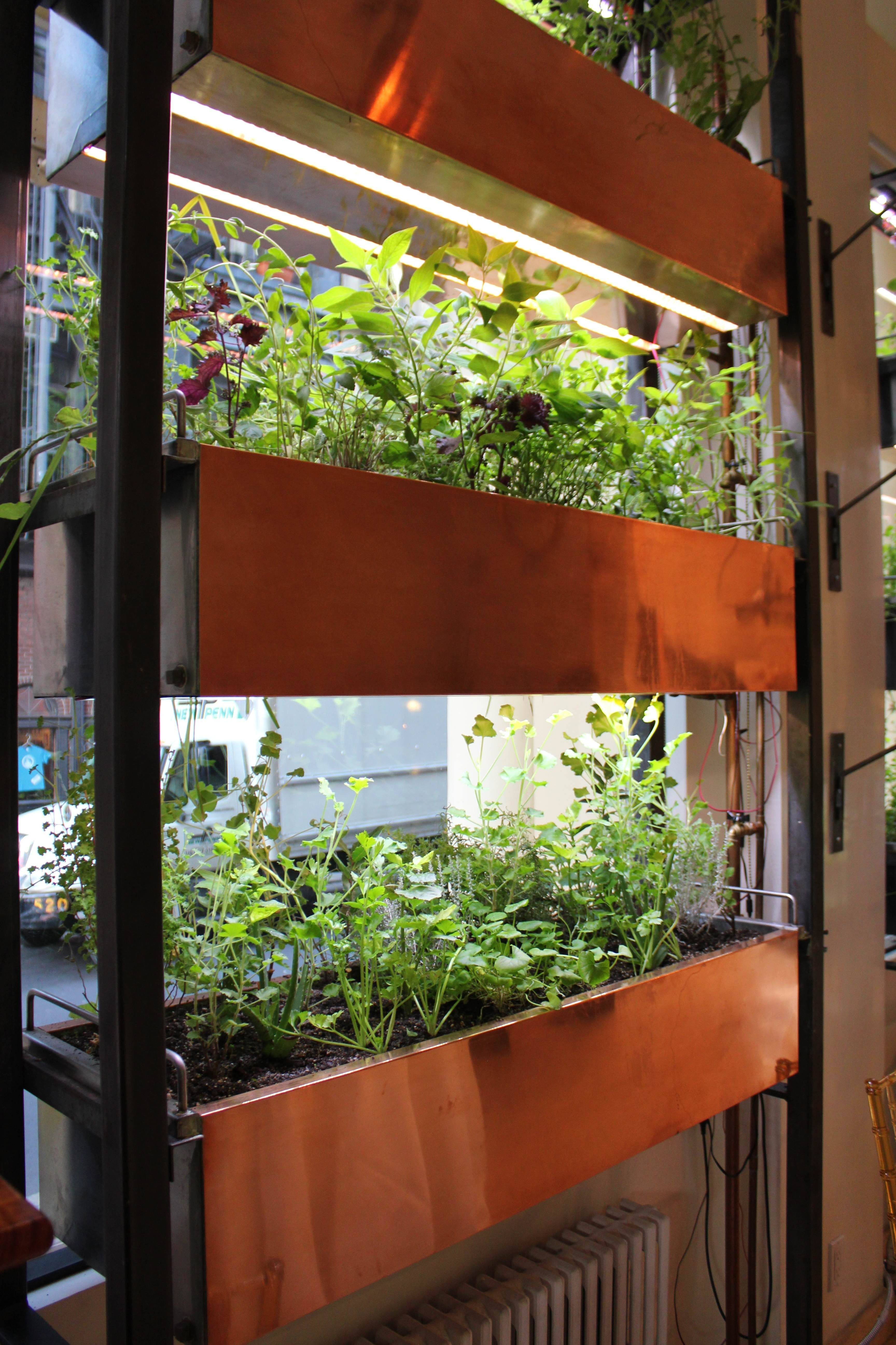 urbangarden BouleyBotanical hydroponicgardening