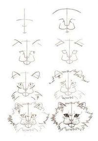 Katzen zeichnen Schritt für Schritt - Anleitung-dekoking-3 ...