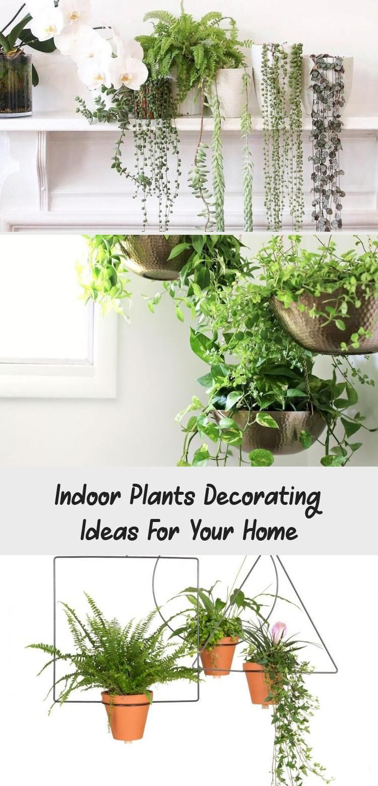 Indoor Plants Decorating Ideas For Your Home Bathroom In 2020 Plants Indoor Plants Bathroom Plants