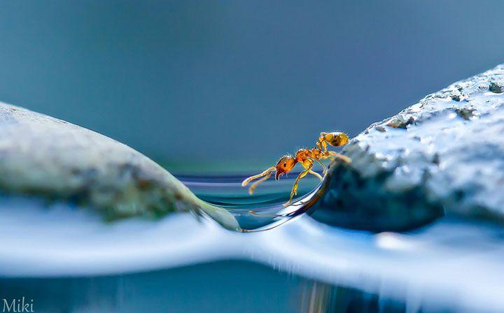 Les clichés macroscopiques de cette photographe capturent le monde majestueux et poétique de la nature