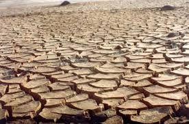 Resultado de imagem para como as plantas e animais se secam