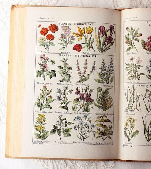 Pin By K A T I E M A M I E On B O T A N I C S Botanical Illustration Vintage Botanical Prints Botanical Drawings