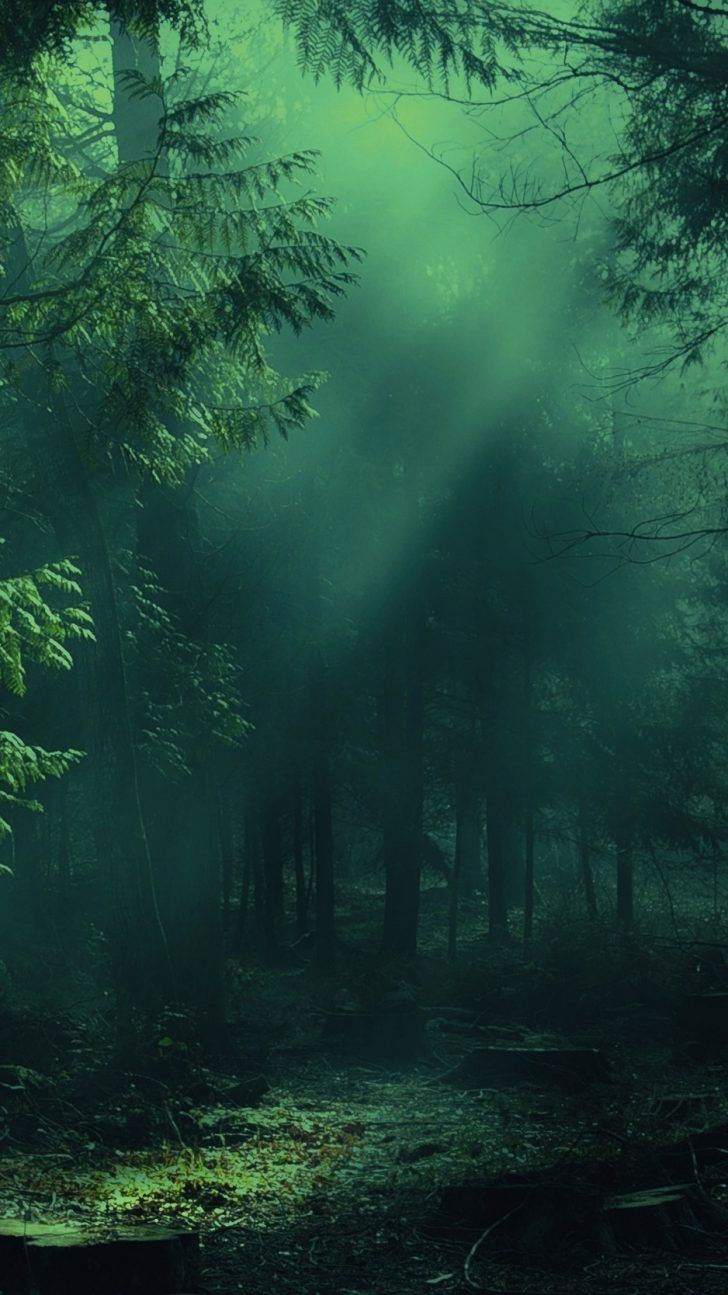 105+ New Amazing iPhone XR Backgrounds Page 2 Forest