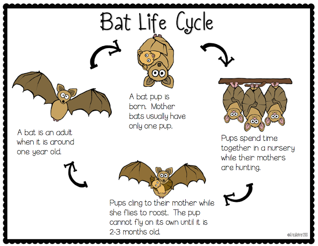 In A Week Or So We Will Be Starting Our Bat Unit First Grade I Thought You Might Doing The Same With Your Graders Hav