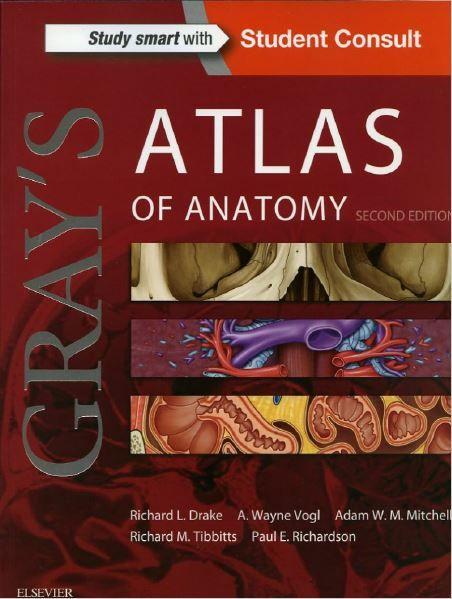 Grays Atlas Of Anatomy 2nd Edition Pharmacy School Pinterest