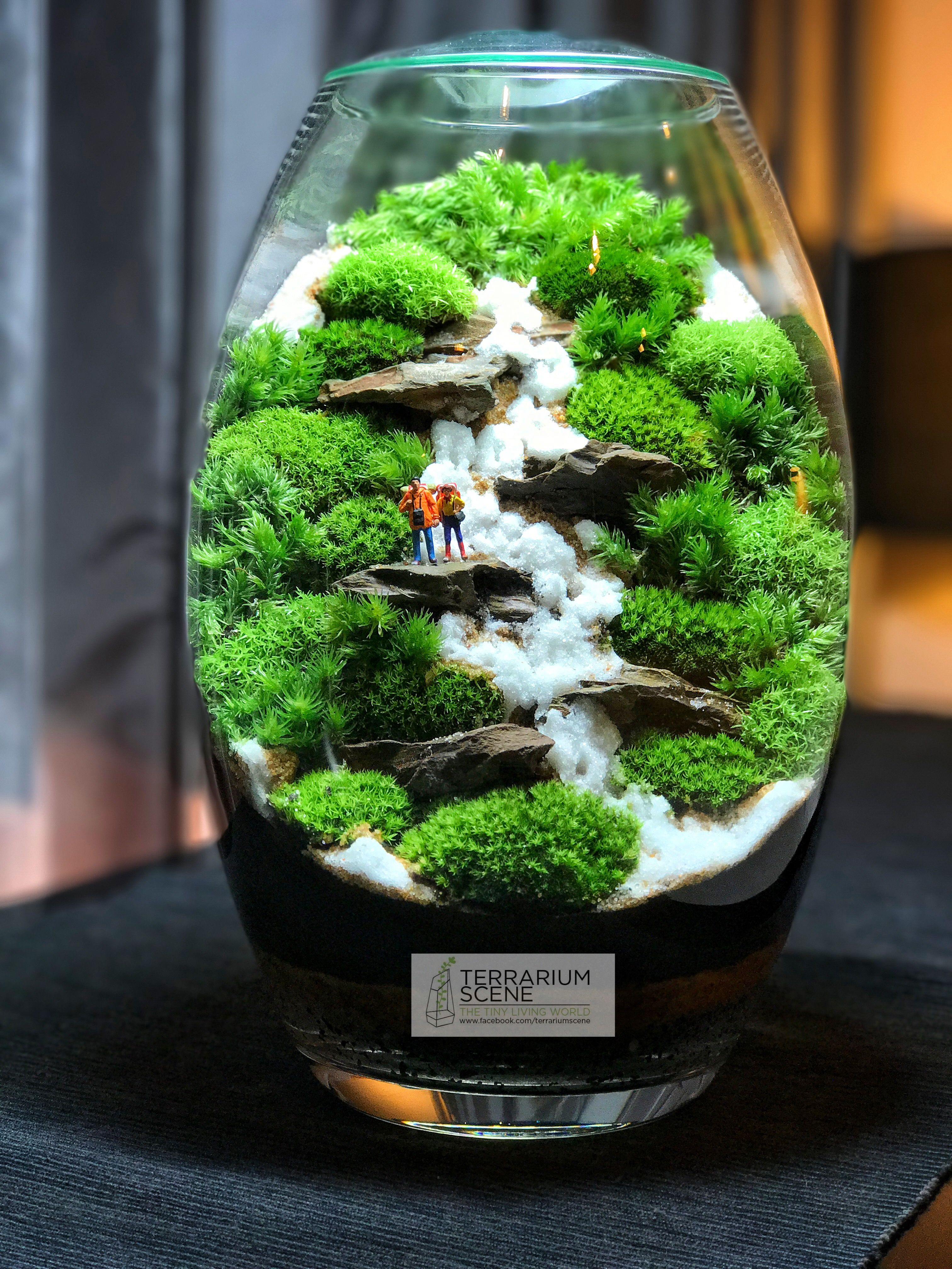 Pin by TerrariumScene on Moss Gardens | Succulent ...