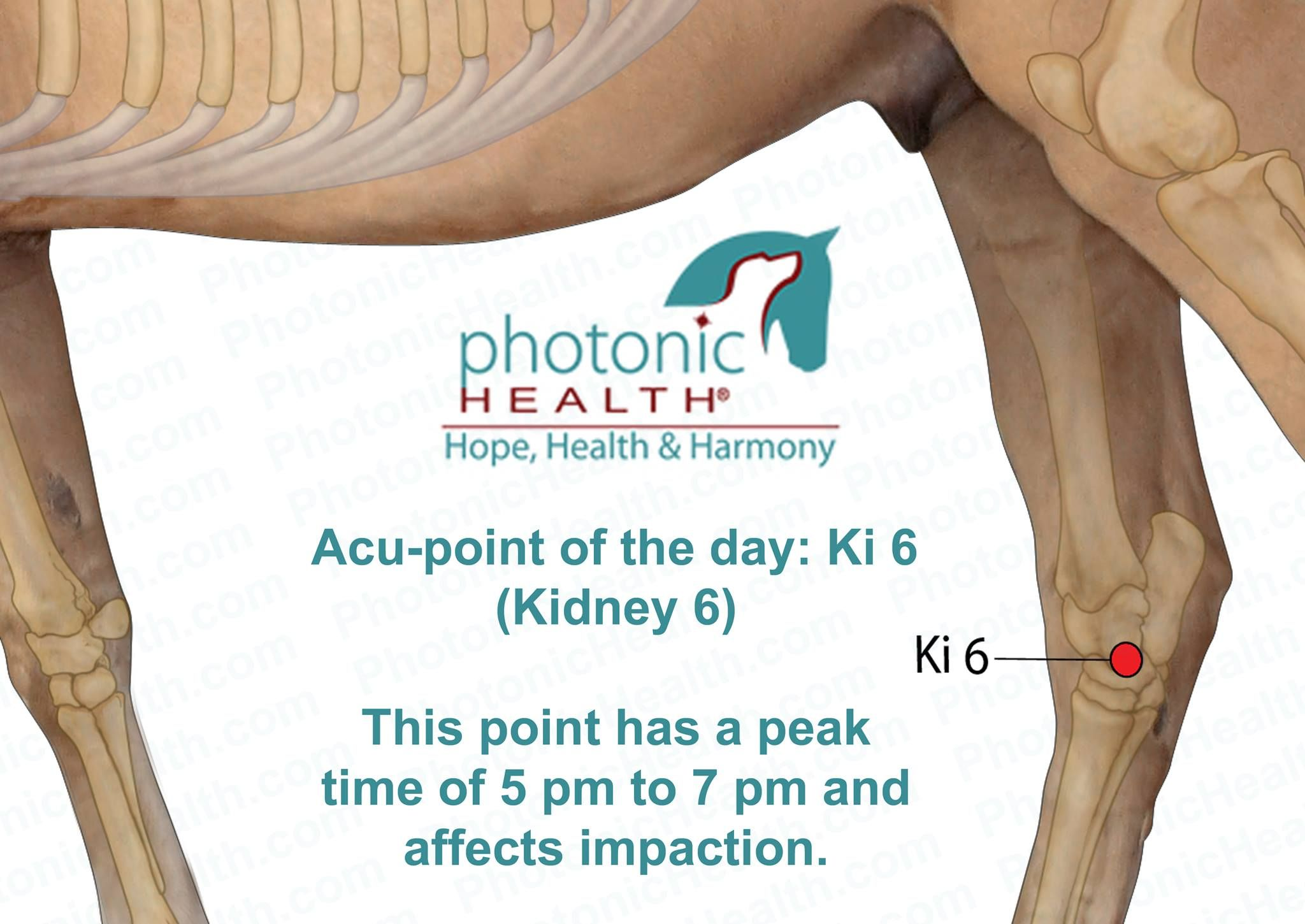 Acu Point Ki 6 Kidney 6 Equine Massage Therapy Healthy Horses