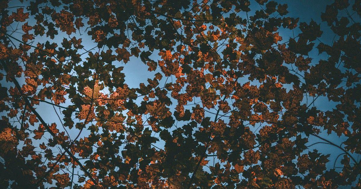 Download Gambar Daun Kering Daun Wallpaper Musim Gugur Kering Langit Hd Layar Lebar Daun Kering Wallpaper Download Ke Ponsel An Gambar Daun Gambar Bergerak