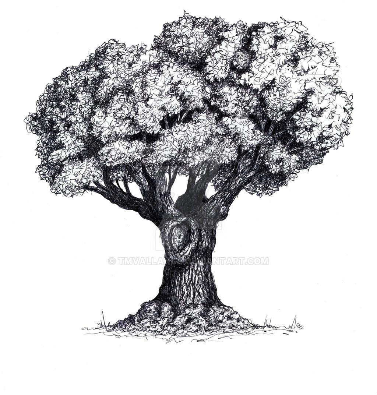 Old Tree By Tmvallance On Deviantart