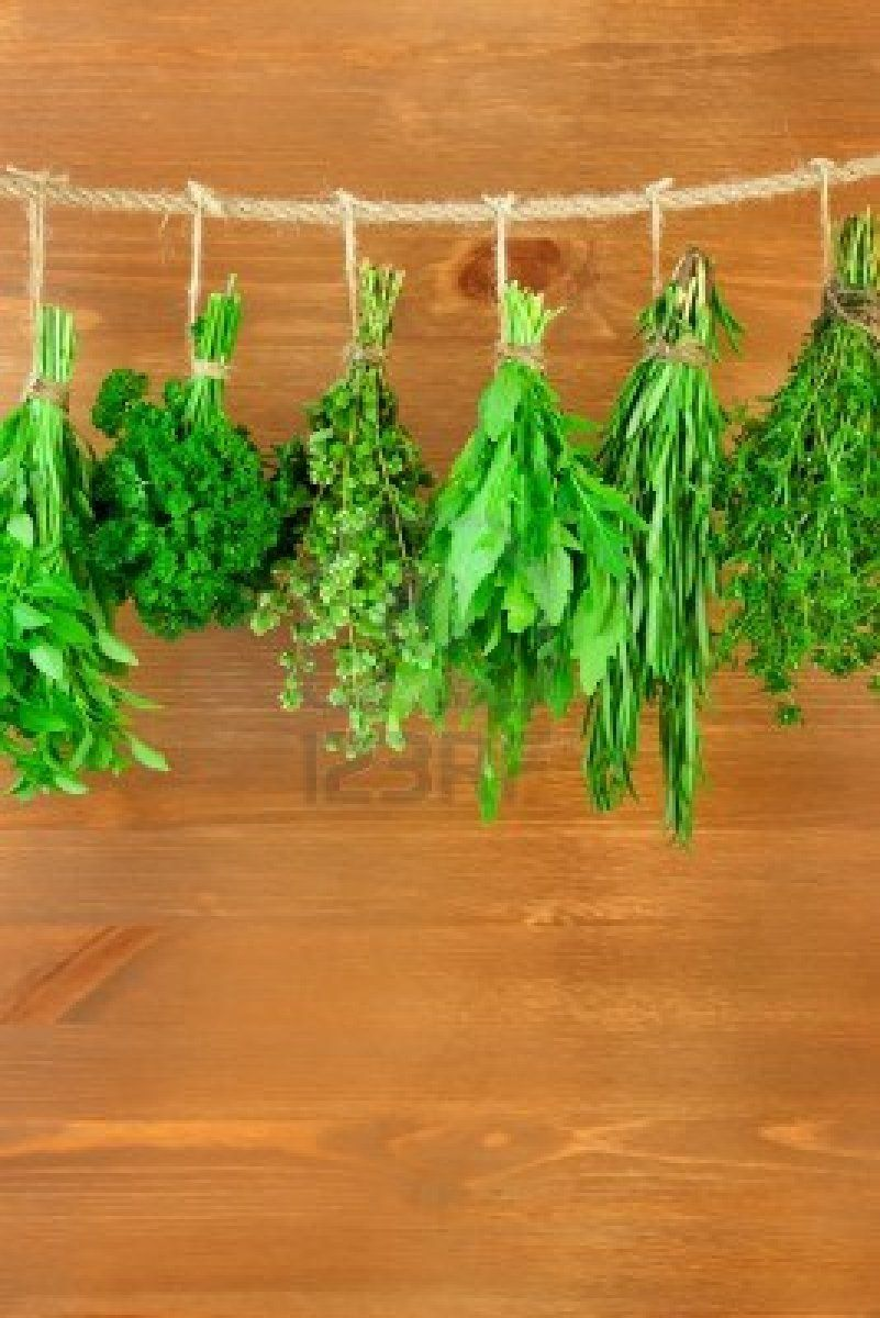 Fresh Herbs Collection is Hanging and Wooden texture / Vintage Style / Vertical composition  #TuscanyAgriturismoGiratola