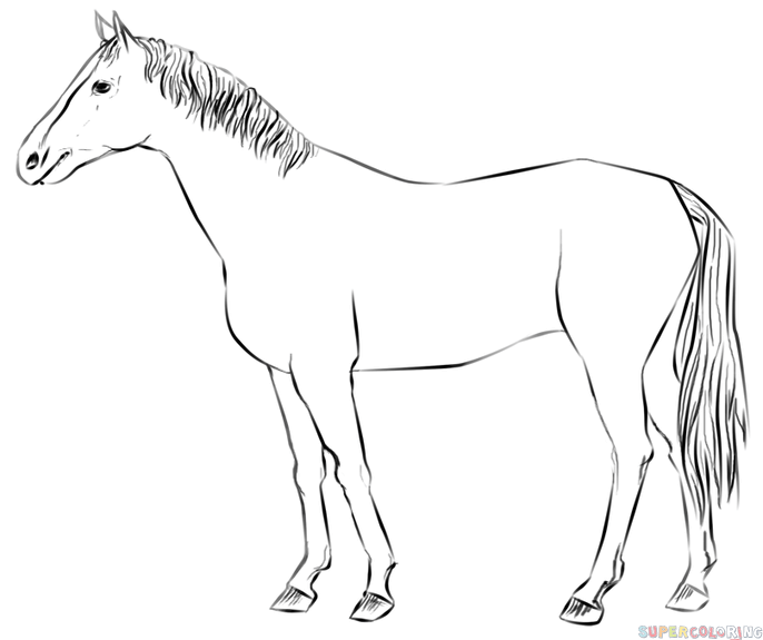How To Draw A Realistic Horse Standing Step By Step. Drawing Tutorials For  Kids And