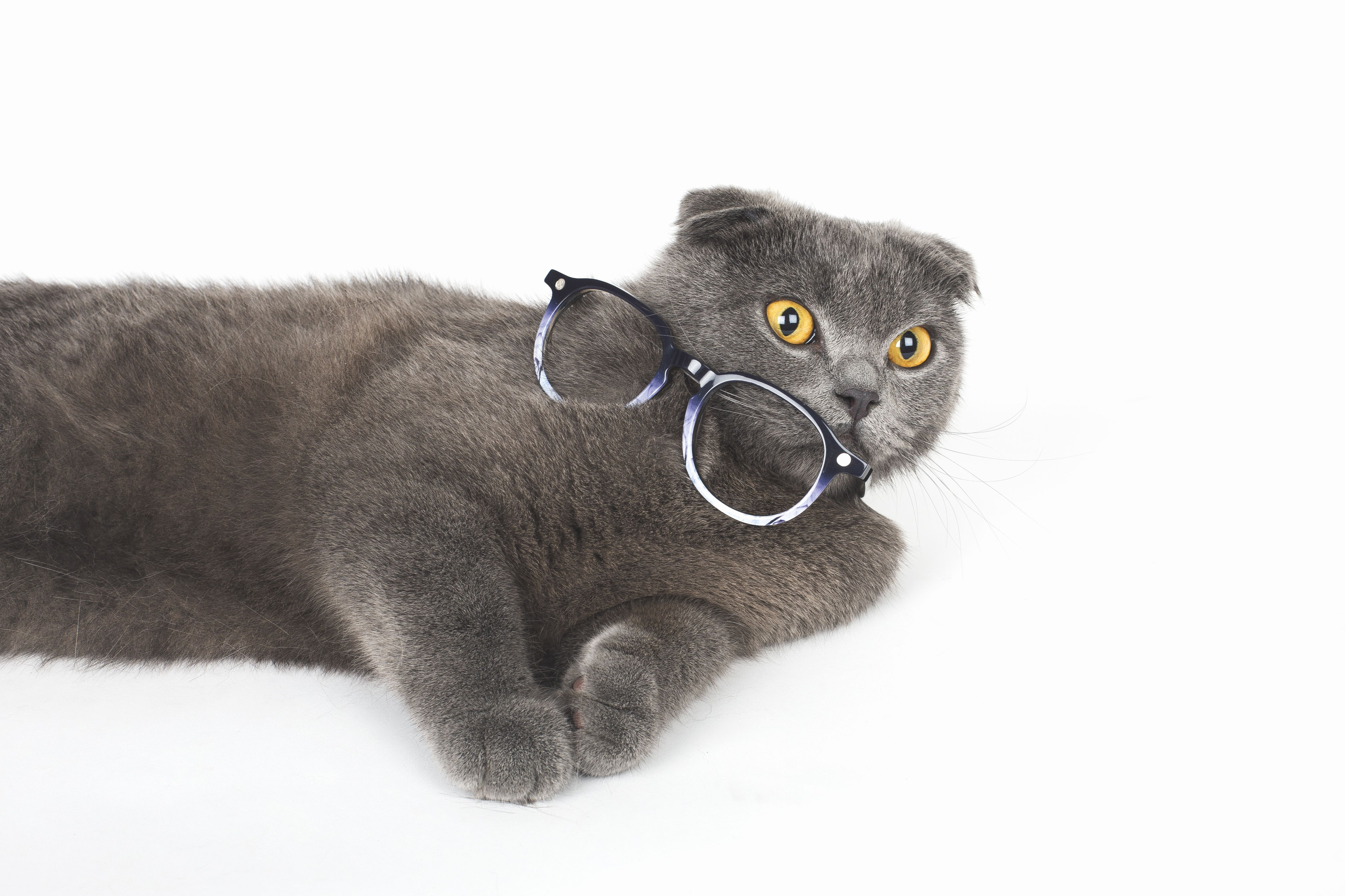 Chat presbyte #cat #cute #glasses