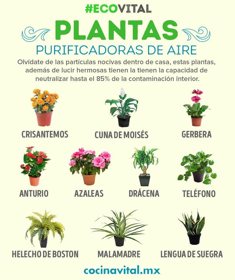11 plantas para purificar el aire dentro de casa