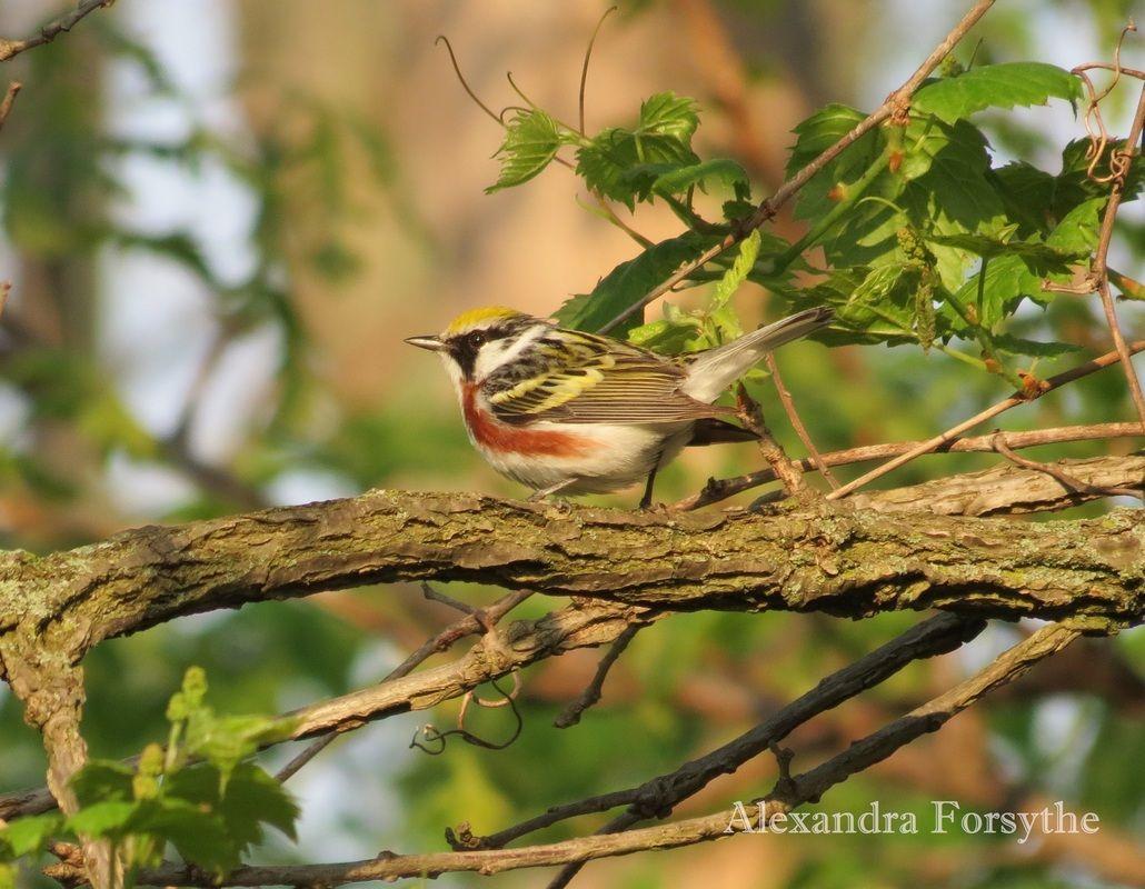 Bon Backyard Birds Of Indiana