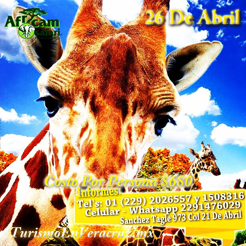 #AfricamSafari te espera este 26 de abril http://www.turismoenveracruz.mx/category/africam-safari-2/