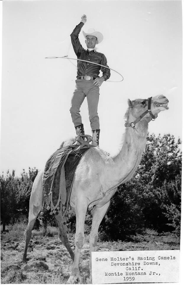 Image result for cowboys camels