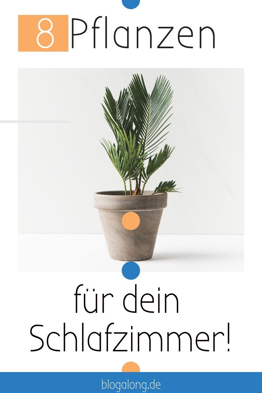 Die 8 Besten Zimmerpflanzen Fur Dein Schlafzimmer Schlafzimmer Pflanzen Pflanzen Zimmerpflanzen