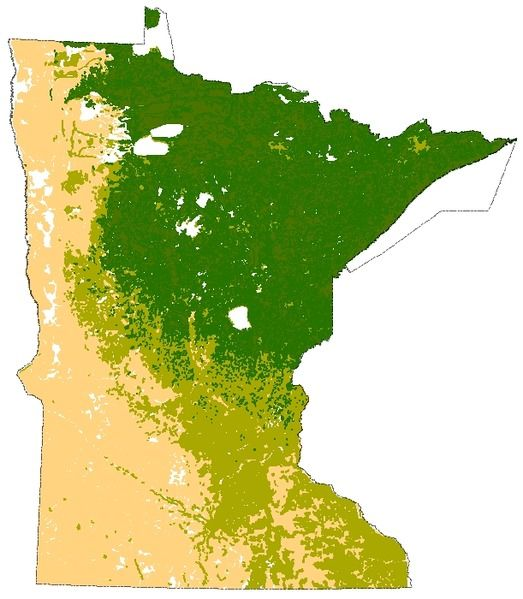 Week Minnesota Biomes Map YellowPrairie OliveDeciduous - Biomes of the us map