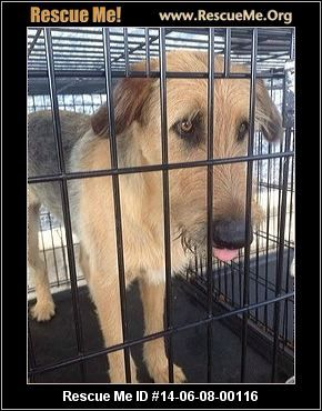 Killeen Texas Post Animal Animals Texas
