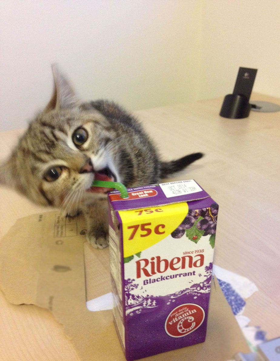 I M Drinkin Yer Juice K Tiny Kitten Cats Cute Cat