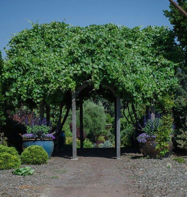 The Arbors At California Oaks: Arbor At Circle Oaks Ranch, Petaluma, California, Garden