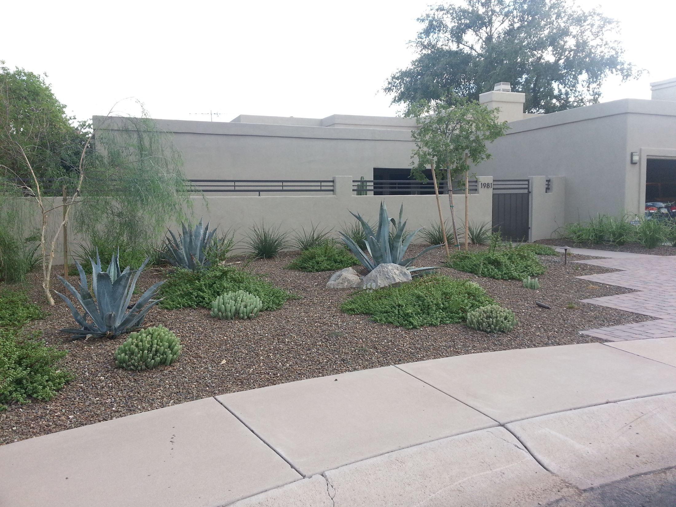 Desert Modern Landscape