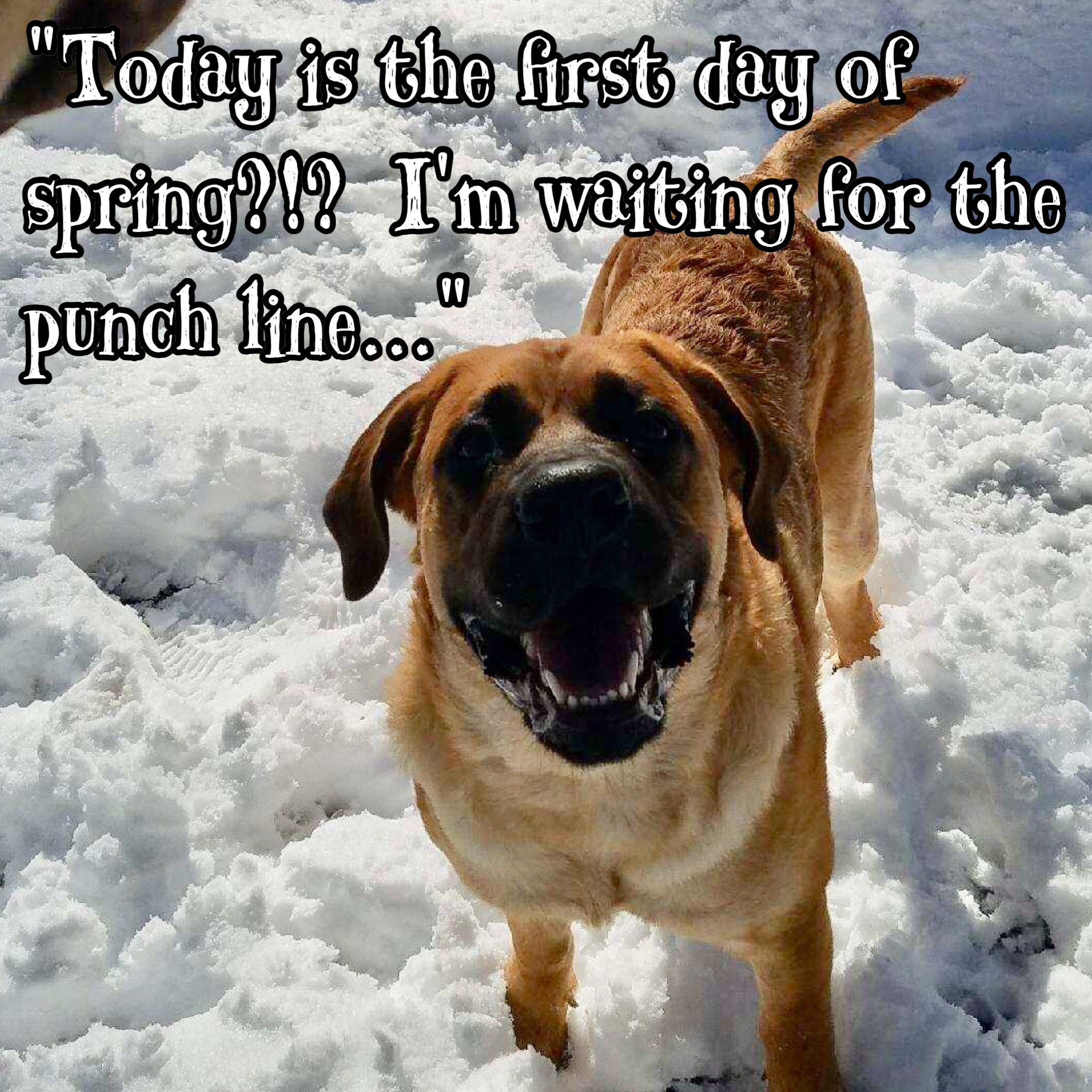 It S Spring Now Just Waiting On Summer Dogantics Funwithdogs Dogboarding Doggiedaycare Tellitlikeit Funny Meme Quotes Dog Daycare Dog Boarding