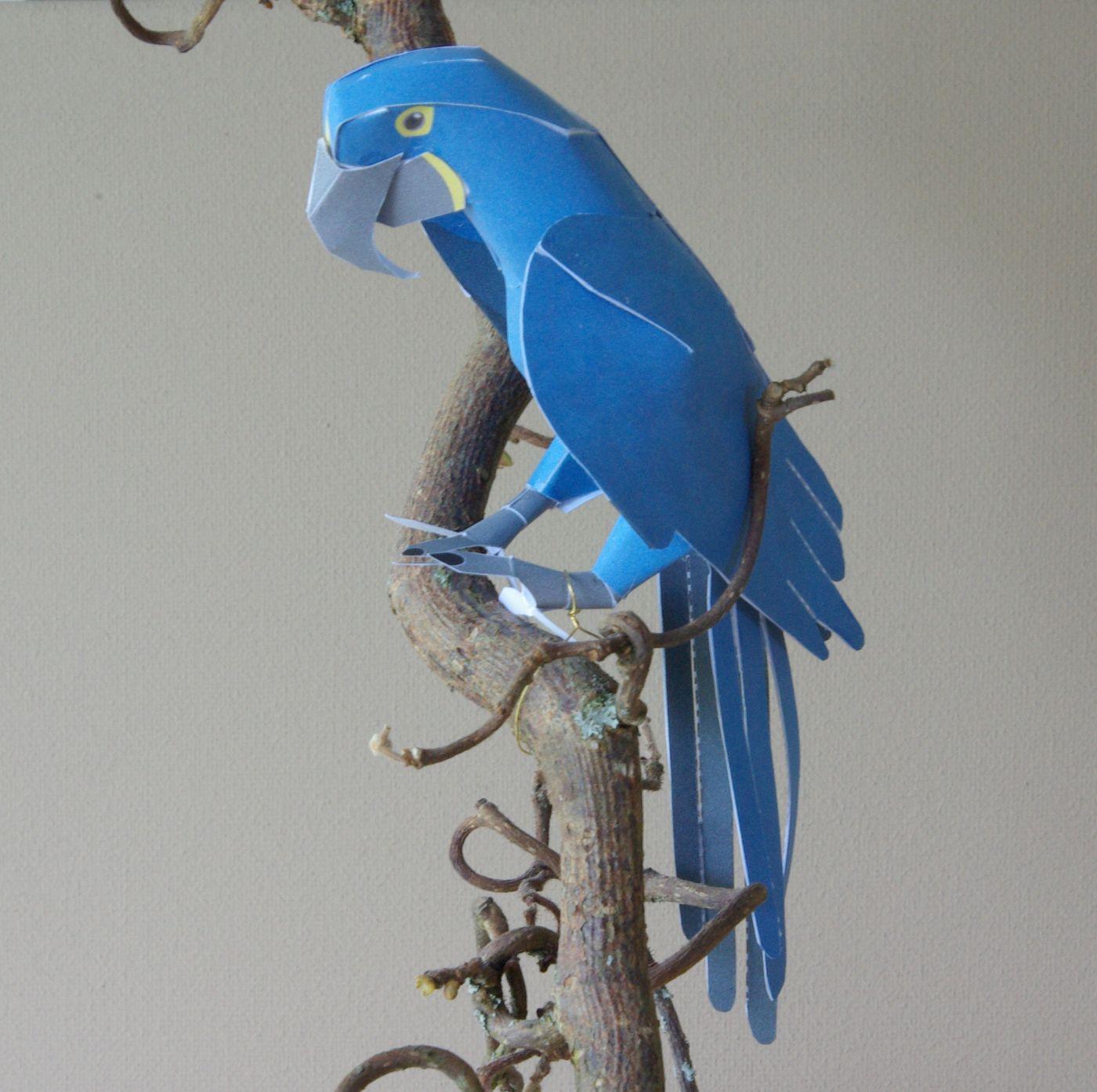 Papagei Papier basteln Hyacinth Macaw Yamaha Rare Animals Of The ...