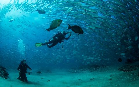 cabo_diving_II